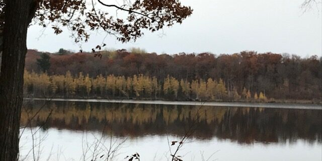 Larches reflected in Straight Lake