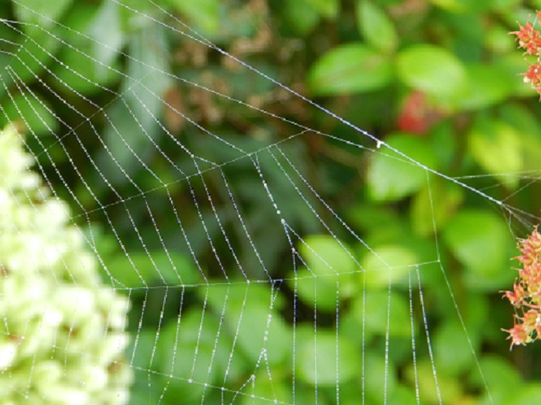 water droplets on spider web