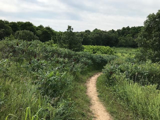 Sumac along the Trail